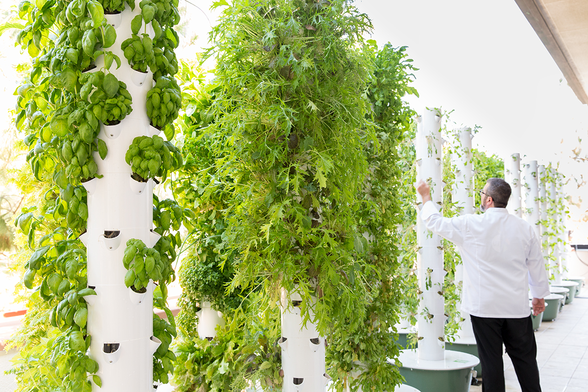 Photo of aeroponic towers with vegetables.